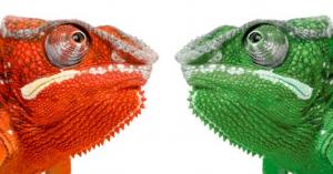Two Lizard